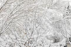 albero-nell-orario-invernale-rami-coperti-di-neve-bianca-e-ghiaccio-48618973