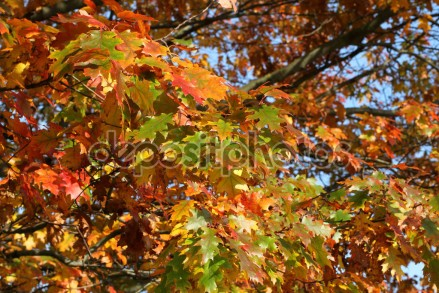 depositphotos_77808664-autumn-yellow-green-and-orange
